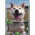 GRの犬ワンワンワン【P】{EX08251/???}《GR》